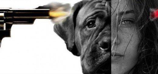 állatok-megölése_boriítókép-2-800x291[1]